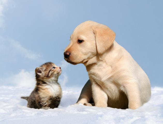 犬だけじゃない!雪が好きな動物とは