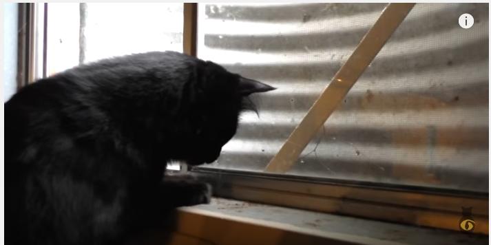 窓に張り付くネズミにニャンだ!これは!?