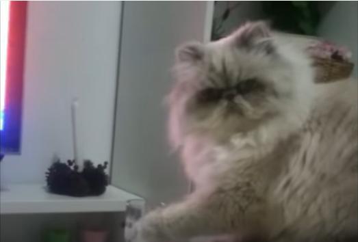 何か文句ある?飼い主の悲痛な制止を聞かぬ猫