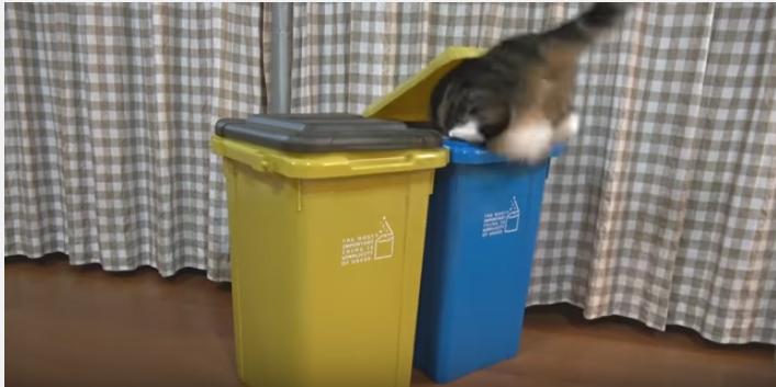 スコ猫まるくん、ゴミ箱に入った後は?