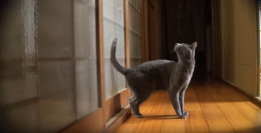 賢い猫は、飼い主さんを自分で呼びます