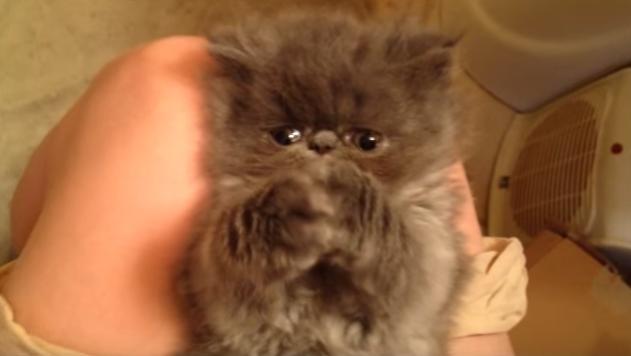 ぶさかわネコ好き必見!寝起きのぶさかわ子猫ちゃん
