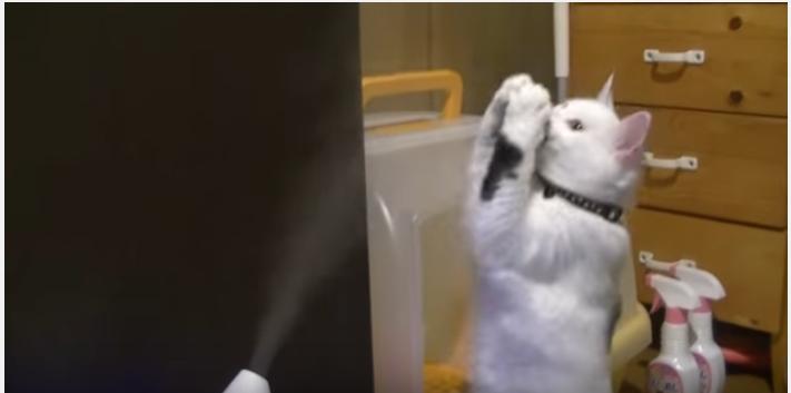 なぜ掴めない?加湿器に悪戦苦闘する猫