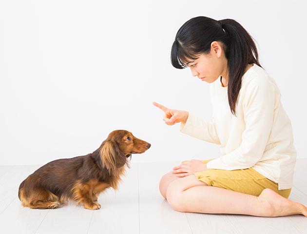 犬が床を舐めるのを防ぐ「しつけ方法」とは