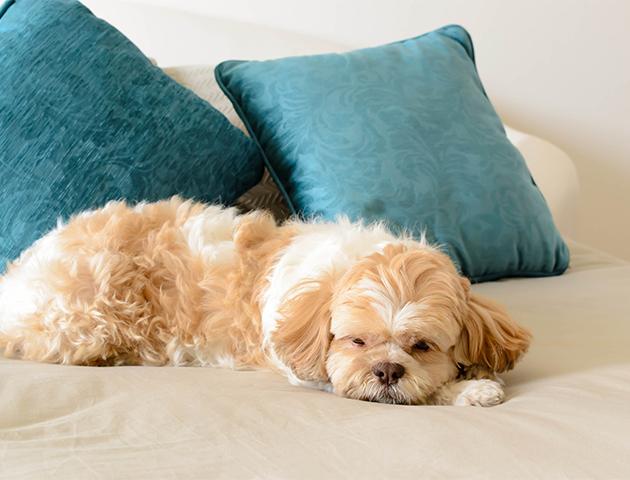愛犬をペットホテルに預ける際の「持ち物」リスト