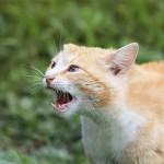 猫が威嚇行動を起こす理由と、正しい対応方法について
