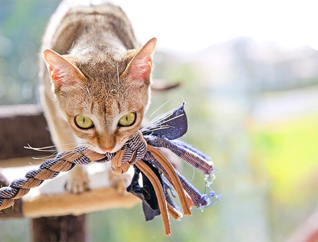 猫がカーペットを食べる!?「ウールサッキング」の原因とは
