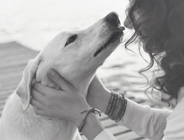犬が雷を怖がる「雷恐怖症」の原因と解決方法