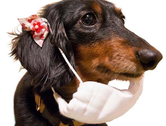 犬や猫も「花粉症」になる? ペットの花粉症の症状と対処法