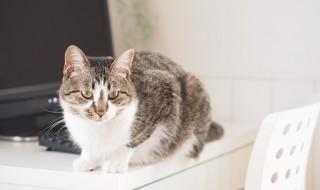 猫が机の上の物を落とす心理と対策方法