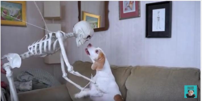 飼い主さんのイタズラ、陽気なガイコツと犬