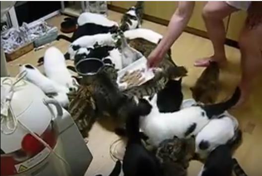 ご飯に大集合の猫たち、その数34匹!?