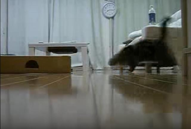 格好いい!!スライディングで箱に入るネコ