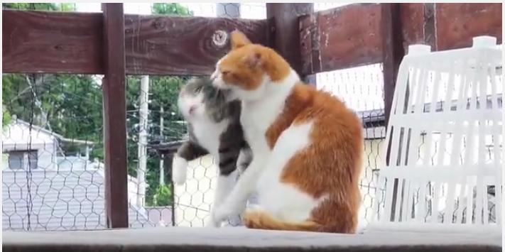 スリスリを拒否されたネコの神対応