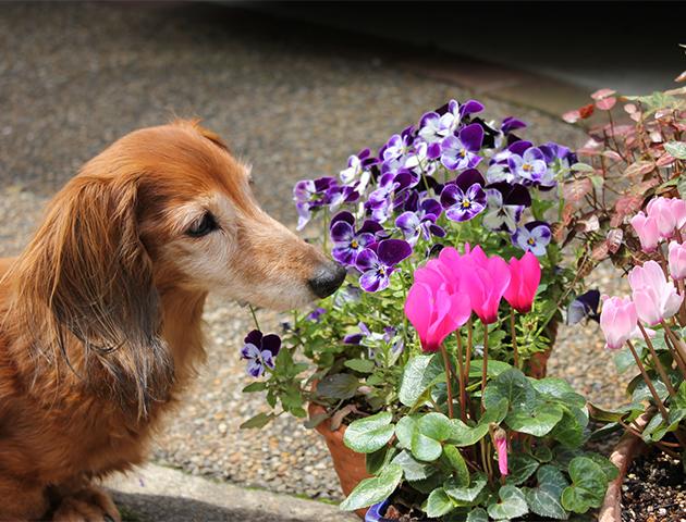 愛犬のこの動きは老化からきている? 愛犬の老化度をチェックしよう!