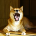 犬の「クセ」はどんな意味があるの?