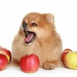 犬は甘党!? 犬が甘党になった原因と与えていい果物について