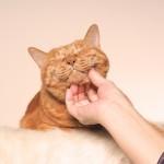 猫がゴロゴロと鳴くのはどうして? そして鳴かなくなる理由とは