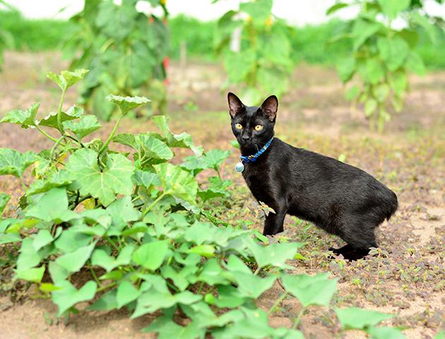 日本で短いしっぽの猫が多い理由と愛されるひみつ