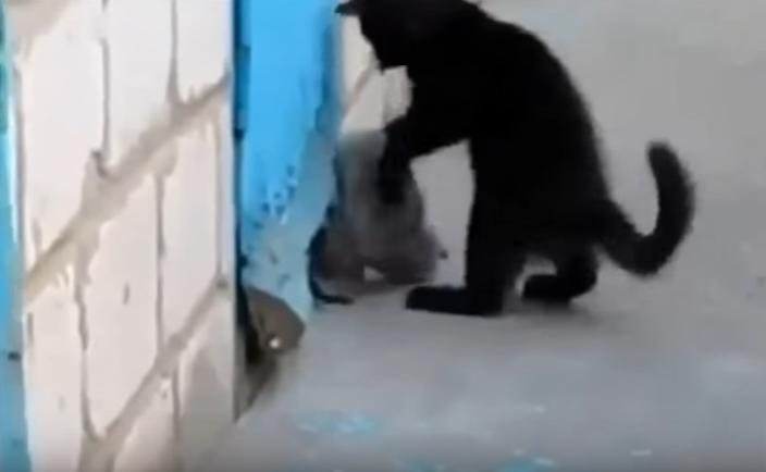 救出劇!子犬を助ける子猫