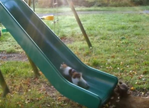 人間だけじゃ無い!子猫も大好き滑り台