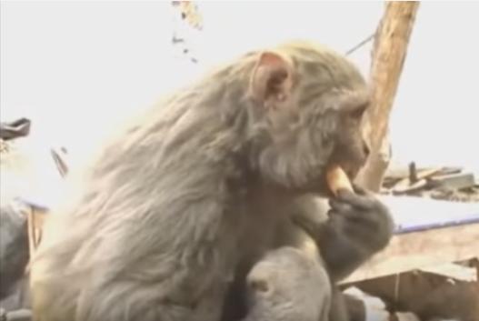 お猿さんのおっぱいを飲んでいるのは、ナント犬
