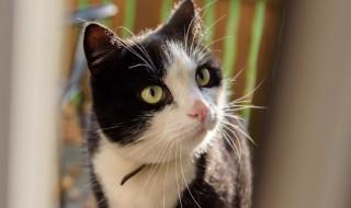 cat1228