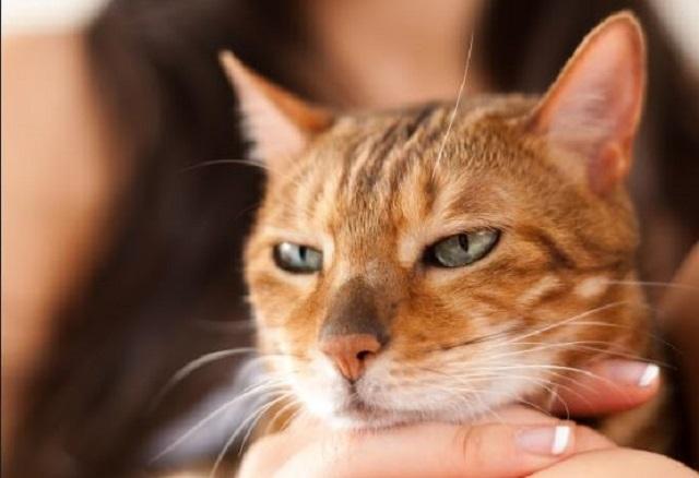cat20190710