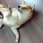 shibasouji_R